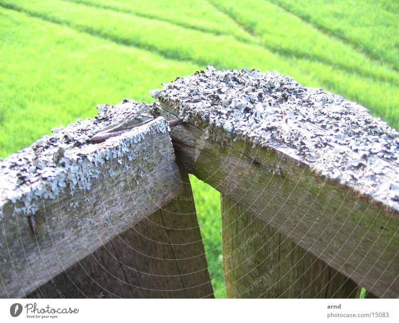 Green Plant Meadow Grass Wood Field Tracks Derelict Wooden board Nail Animal tracks Hunting Blind Lichen