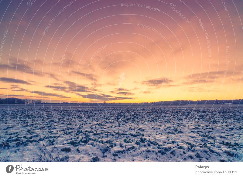 Sunrise in a winter landscape Sky Nature Vacation & Travel Blue Beautiful Landscape Clouds Winter Forest Environment Snow Grass Natural Park Weather