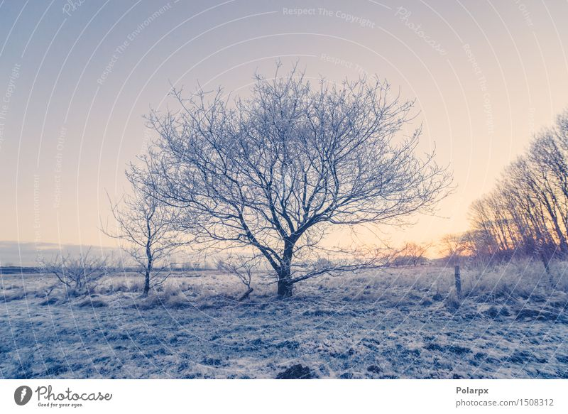 Frozen tree on a field Beautiful Vacation & Travel Winter Snow Nature Landscape Sky Weather Tree Cool (slang) Bright Blue White Loneliness Denmark Scandinavia