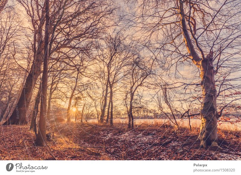 Sunrise on a winter morning Nature Vacation & Travel Beautiful White Tree Sun Red Landscape Winter Forest Environment Snow Natural Bright Park Weather