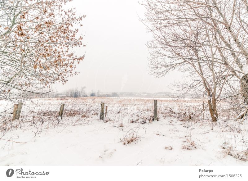 Fence in a winter scenery Sky Nature Christmas & Advent Beautiful White Tree Landscape Winter Forest Environment Snow Grass Gray Weather Fog Cool (slang)