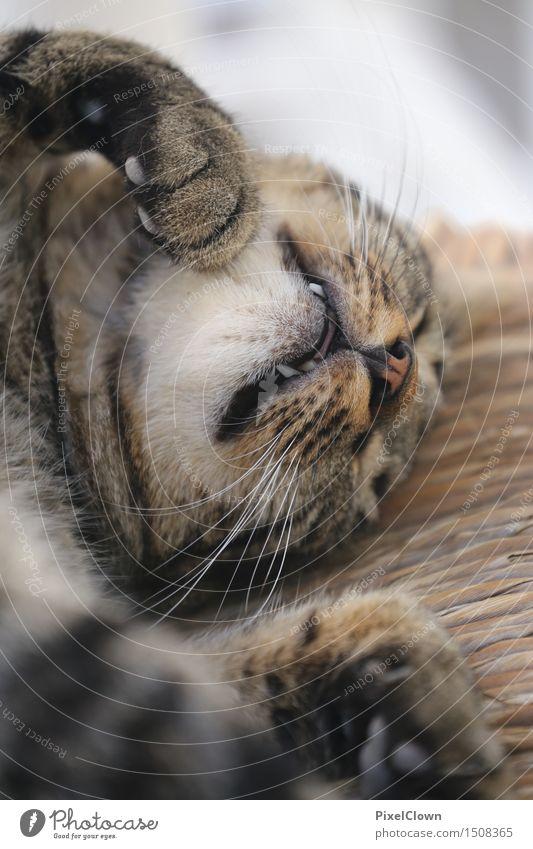 Sleeping cat Animal Cat 1 Cute Beautiful Brown Esthetic Calm Dream Colour photo Interior shot