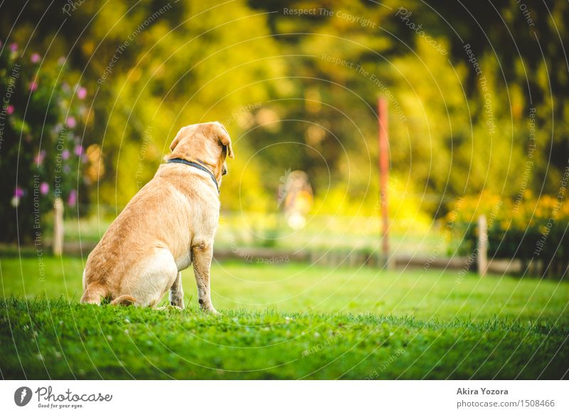 longing Beautiful weather Garden Meadow Animal Pet Dog 1 Observe Discover Looking Sit Wait Natural Yellow Green Violet Orange Red Black Emotions Moody Loyalty