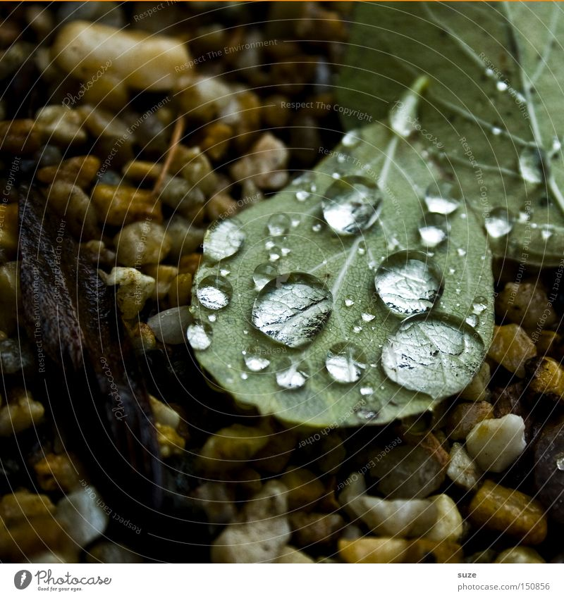 Nature Green Leaf Autumn Stone Rain Drops of water Transience Seasons Autumn leaves November Fallen