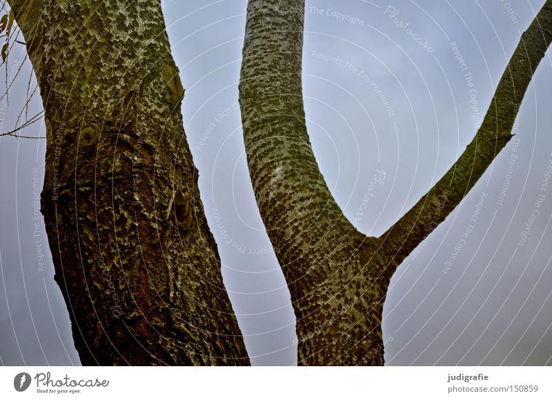 Nature Sky Tree Environment Branch Tree trunk Bleak Tree bark Badlands Deciduous tree Junction Ypsilon