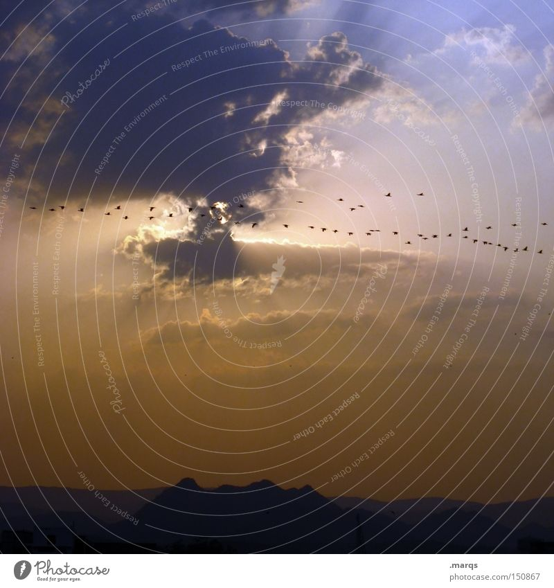 migratory birds Bird India Clouds Sun Flying Flock of birds Migratory bird Horizon Twilight Sunset Summer Aviation Warmth Vacation & Travel