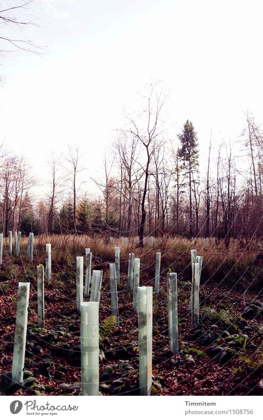 What do I know?! Environment Nature Plant Earth Autumn Forest Plastic Growth Brown Green Clearing Spruce Deciduous tree Bleak afforestation Protective cover
