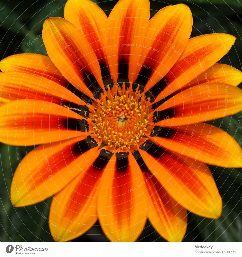 Nature Plant Green Beautiful Summer Sun Flower Leaf Black Environment Yellow Warmth Blossom Natural Garden Brown