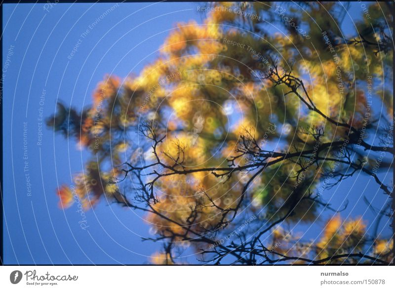 Sky Blue Tree Joy Colour Leaf Autumn Empty Clarity Branch To fall End Considerable Rich Autumnal colours Colouring
