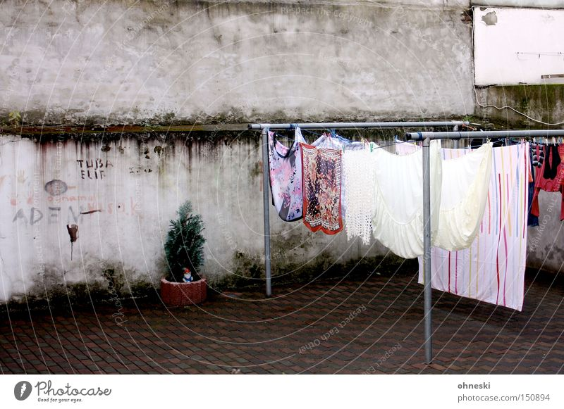 Plant Wall (building) Wall (barrier) Clothing Shirt Laundry 50 Backyard Household Courtyard Dry Sheet The Ruhr Clothesline