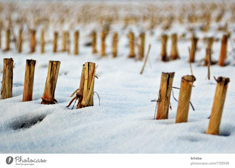 Maize_Sculptures Maize field Winter Snow Cold Old Loneliness Field Stopper Harvest Ground Cute Grief Distress Fallow land