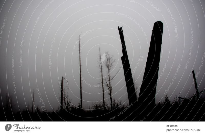 Tree Forest Fog Climate Gale Climate change Black Forest Damage Black & white photo Storm damage