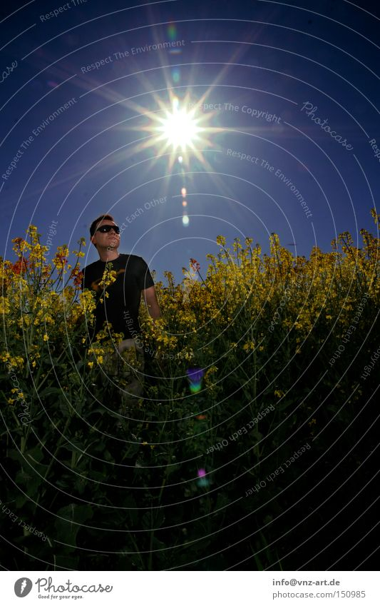 rapsfeld Canola Field Canola field Sun Summer Man Back-light Exposure Blue Yellow Sunglasses