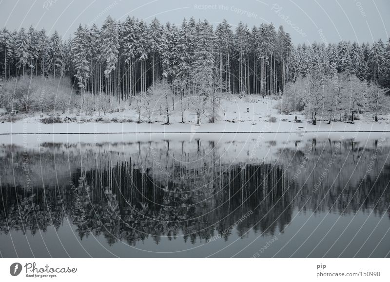 water level Lake Water Reflection Lakeside Forest Tree Winter Snow Ice Cold Frost Dark Shadow Calm Loneliness Nature