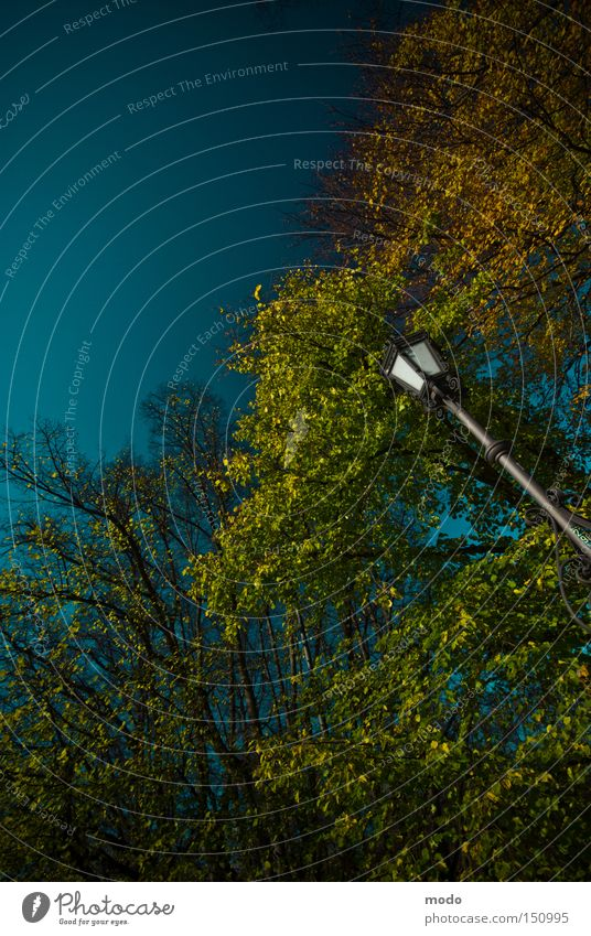 The Lamp in Wonderland (also without Alice) Sky Blue Gold Tree Autumn Vertigo Column