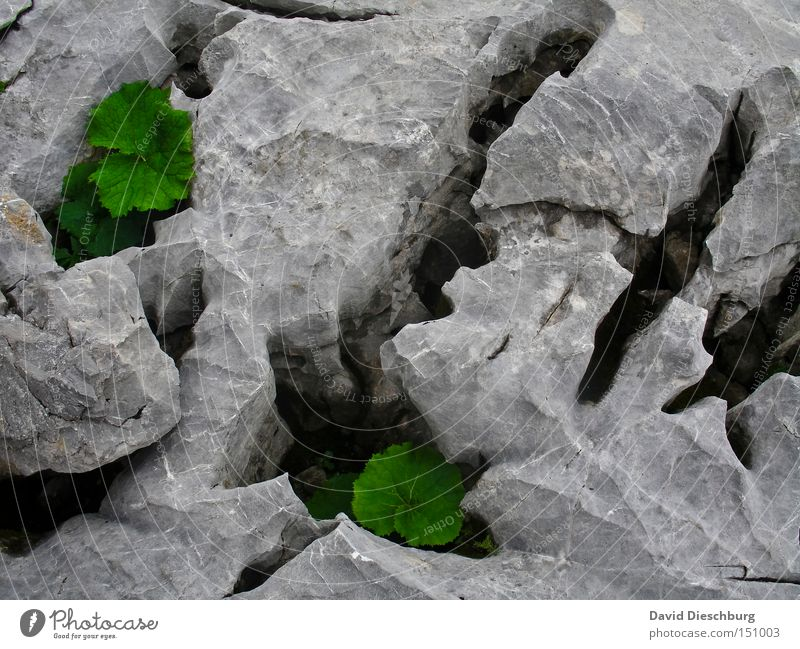 cracks in the ground Colour photo Detail Structures and shapes Morning Day Light Shadow Contrast Bird's-eye view Mountain Nature Plant Spring Summer Autumn