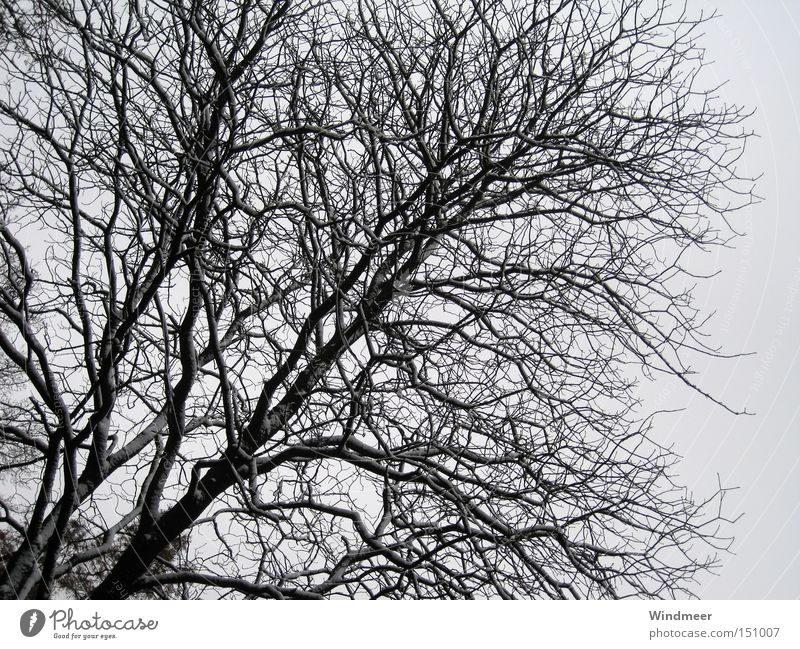 Black on grey Tree Branchage Bushes Bleak Cold Snow Wood flour Forest Winter Twig