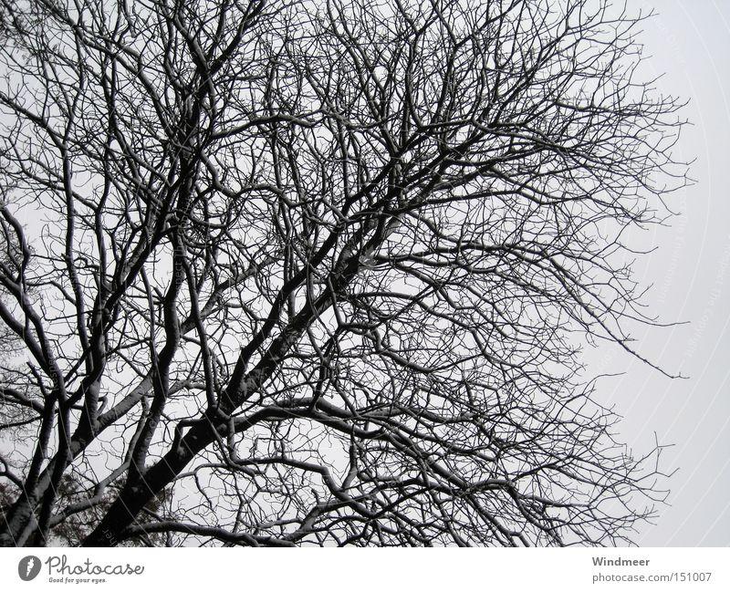 Tree Winter Forest Cold Snow Bushes Twig Bleak Branchage Wood flour