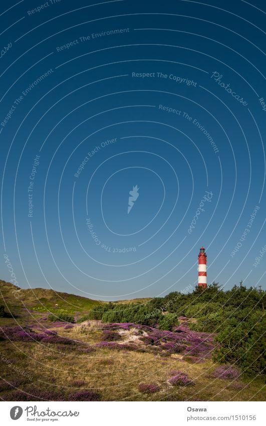 Amrum / Lighthouse Environment Nature Landscape Plant Sky Cloudless sky Summer Heather family Vacation & Travel Beach dune Deserted Summer vacation Colour photo