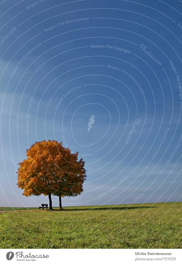 Sky Nature Blue Green Tree Landscape Far-off places Autumn Grass Happy 2 Field Growth Copy Space Stand In pairs