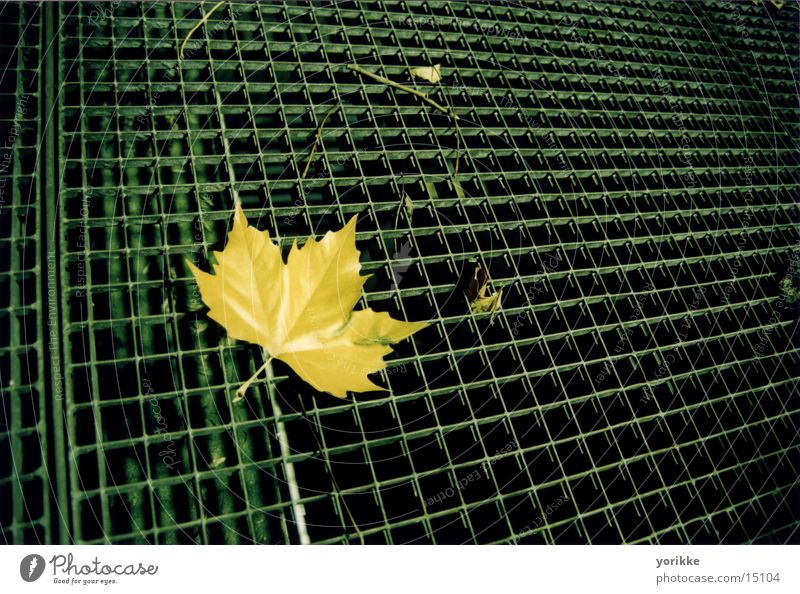 versus Leaf Grating Night latern light