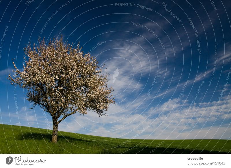 peaceful Tree Clouds Apple tree Pear tree Pol-filter Meadow Green Branch Tree trunk Grass Growth Fruit Nutrition Spring Peace blossom spring Food