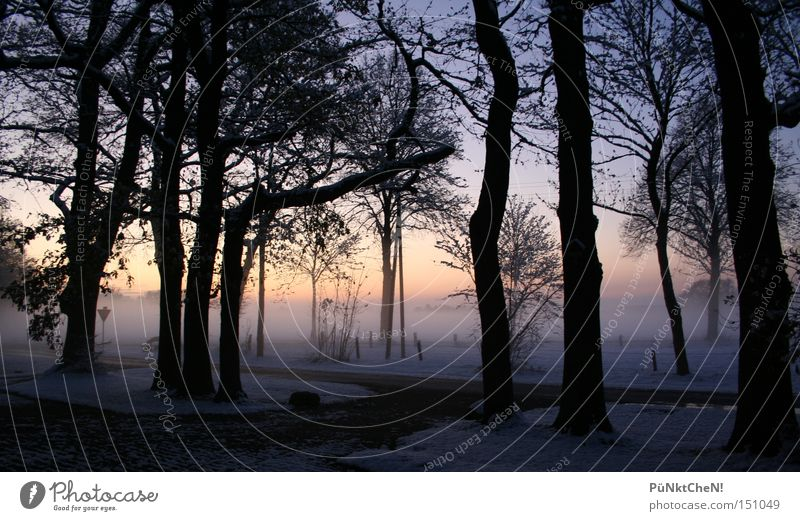 Impenetrable Winter Snow Sunset Fog Tree Sunrise Evening Morning Street Calm Nature Red Sky Highway ramp (exit) Perspective