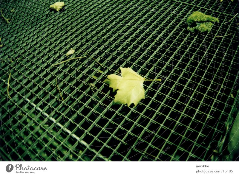 Leaf Grating