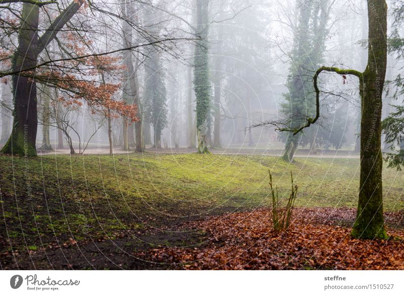 Trees (8/8) Nature wax Oxygen Environment Climate ecology Forest clearing Park Fog Winter Mystic