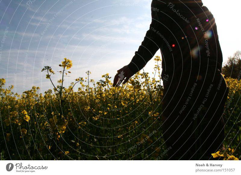 Human being Sky Summer Dream Field Longing Intuition Deepen