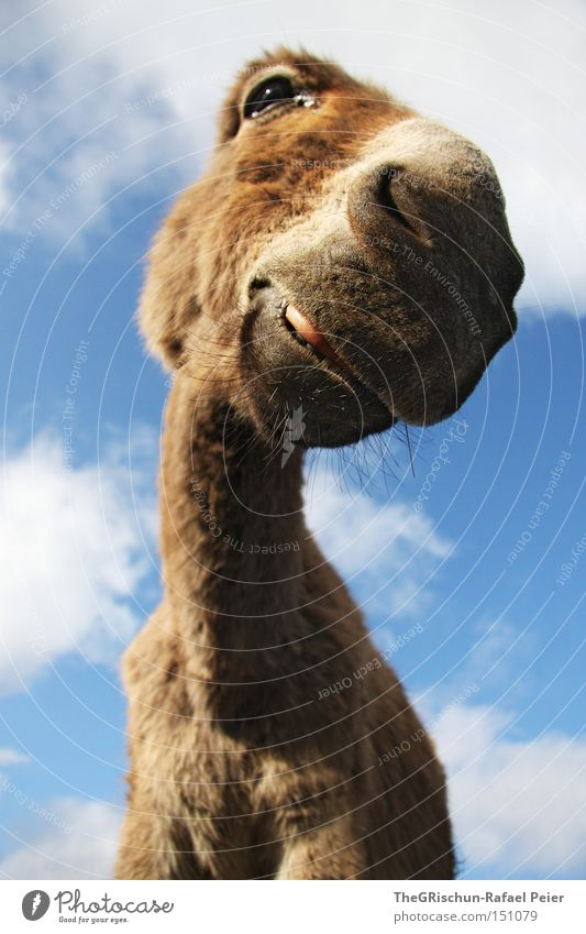 Sky Clouds Animal Eyes Funny Nose Perspective Ear Lips Neck Mammal Donkey Mouth