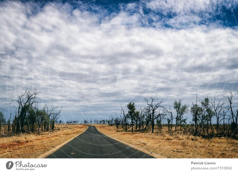 Roadtrip Sky Nature Vacation & Travel Plant Beautiful Summer Tree Relaxation Landscape Loneliness Forest Environment Street Weather Power Creativity
