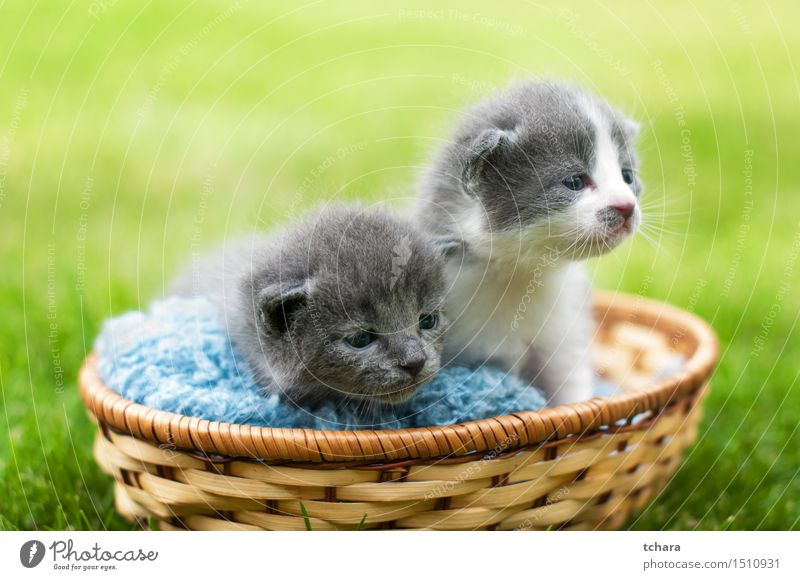 Kittens Beautiful Garden Baby Animal Grass Pelt Pet Cat 2 Baby animal Love Sadness Wait Small Funny Cute Gray Green Domestic cats background young sweet Mammal