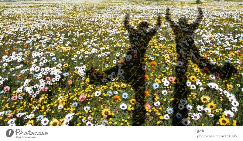 Spring flowers Flower Joy Life Jump Dance Fresh Shadow Enthusiasm Excitement Flow of life