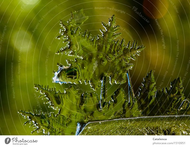 Green Ice Star Elegant Harmonious Meditation Environment Nature Elements Stars Climate Climate change Beautiful weather Frost Ice crystal Frostwork Water