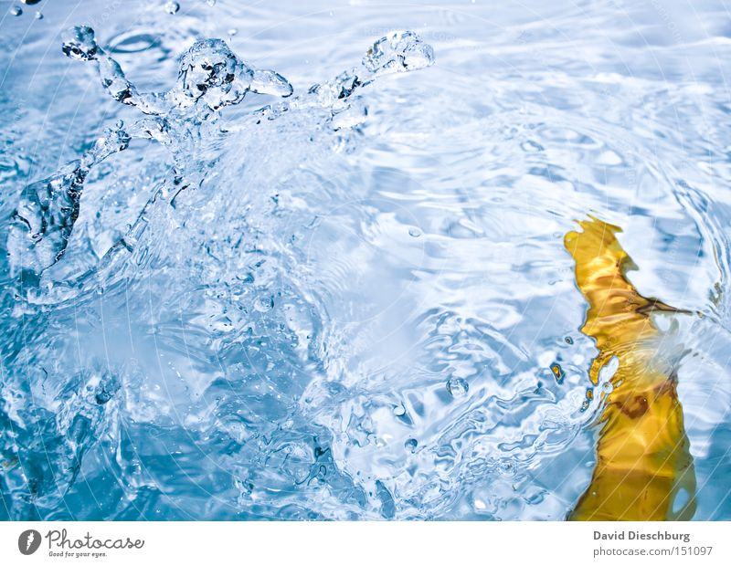 Water Blue Yellow Colour Waves Drops of water Fruit To fall Navigation Inject Banana Tropical fruits