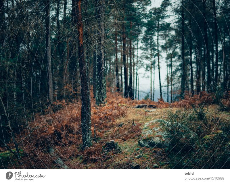 dark places forest trees - photo #16