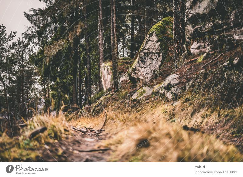 Nature Plant Tree Landscape Forest Lanes & trails Grass Rock Gloomy Bushes Hill Near Moss Forestry Limp Weathered