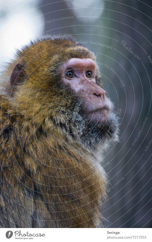 Animal Wild animal Pelt Animal face Monkeys