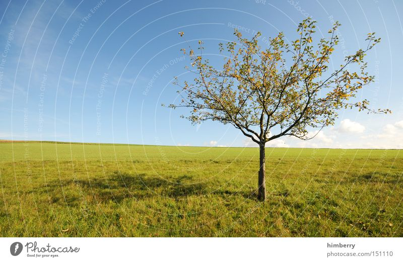 tree site Tree Nature Agriculture Calm Peace Relaxation Seasons Vacation & Travel Leisure and hobbies Landscape Meadow Sky Weather Fruit trees