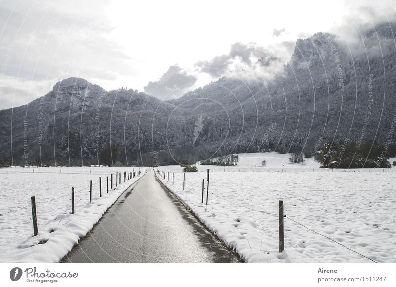 White Loneliness Clouds Winter Dark Forest Mountain Street Lanes & trails Snow Gray Line Field Fog Gloomy Driving