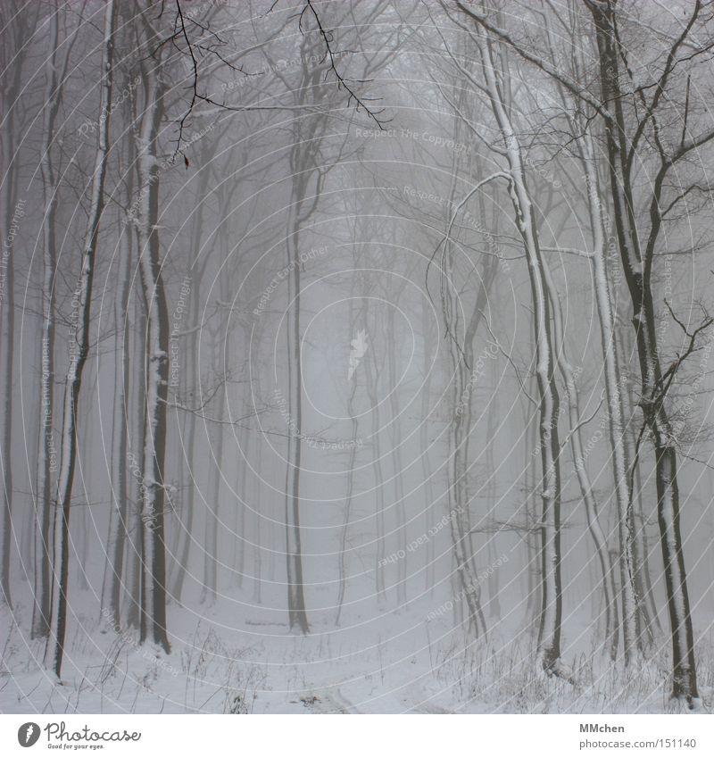Tree Winter Forest Dark Cold Snow Fog Grief Distress Tree trunk Mystic Fairy tale Witch Undergrowth Eifel