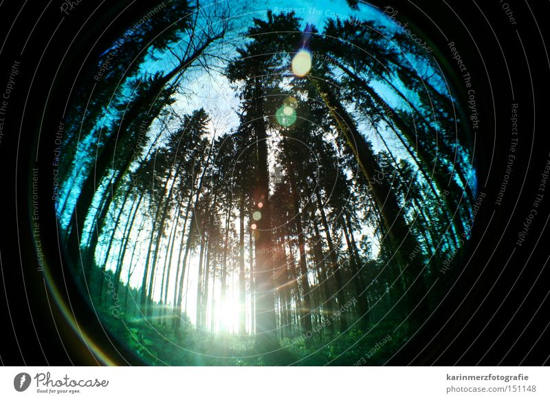 Nature Tree Sun Forest Cold Autumn Fisheye Tall