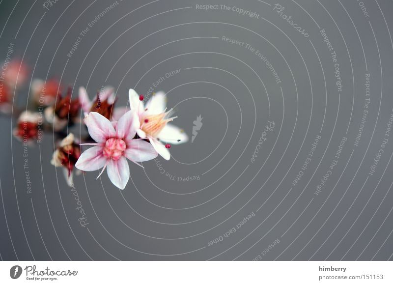 Nature Plant Beautiful Flower Spring Background picture Fresh Esthetic Floristry Horticulture