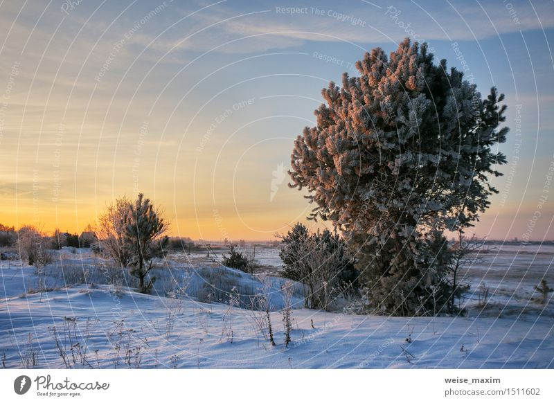 Winter Morning Snow Garden Nature Landscape Plant Sky Clouds Horizon Ice Frost Tree Bushes Meadow Blue Yellow Black White cold Vantage point background wood