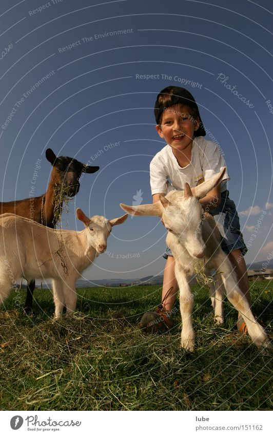 Joy Agriculture Farmer Goats Herdsman Dairy Products Billy goat