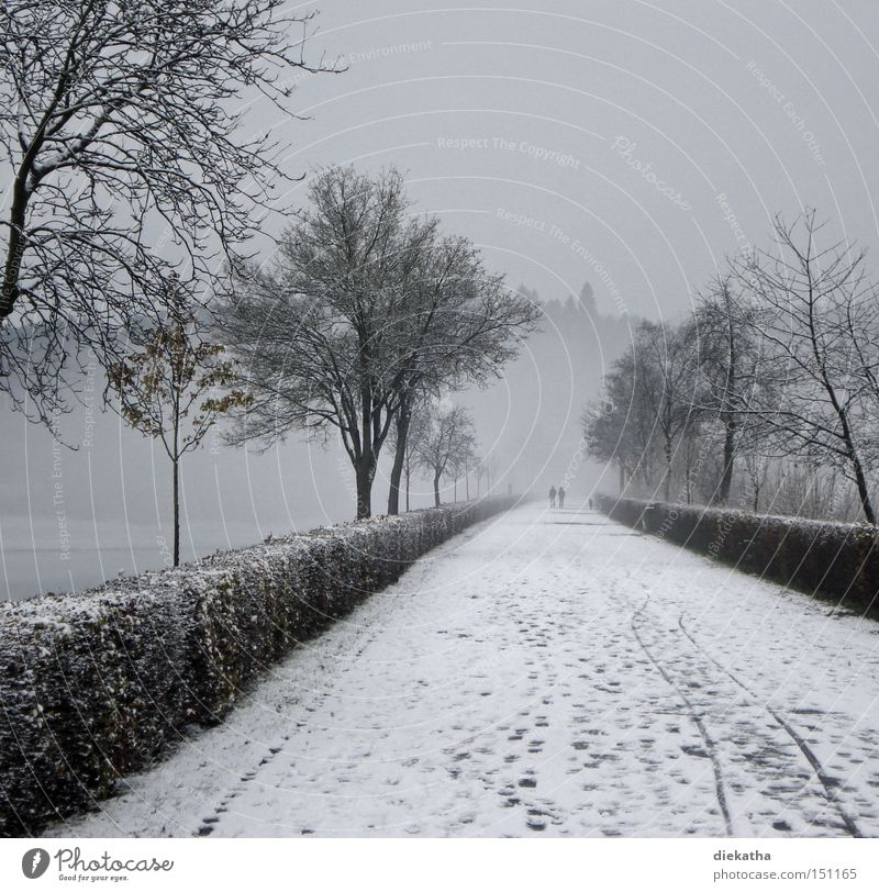 Black and white winter romance Winter Snow Gray Fog White Couple Romance Calm Tracks Lanes & trails Right ahead Tree Cold Grief Distress Park In pairs