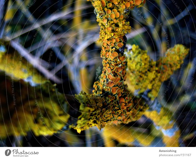 Nature Green Plant Yellow Autumn Wood Gray Orange Branch Contrast Twig Branchage Twigs and branches Overgrown Lichen