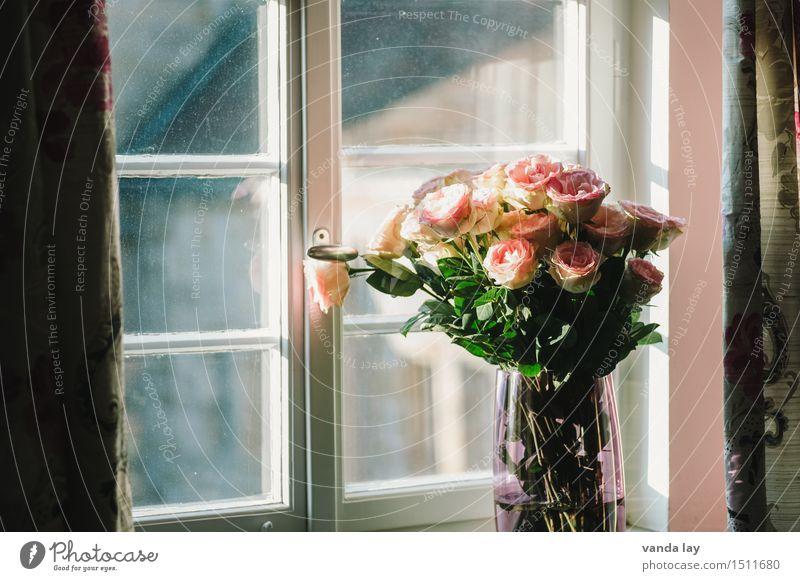 Flower Relaxation Love Lifestyle Style Design Flat (apartment) Living or residing Room Elegant Esthetic Blossoming Romance Wedding Rose Kitsch
