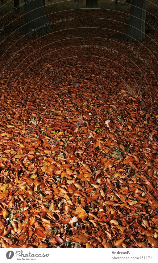 forest ground Leaf Beech leaf Autumn leaves Autumnal Beech tree Woodground Beech wood Creepy October